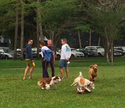 Dogs playing unleashed Sunday in Belle Isle Park.